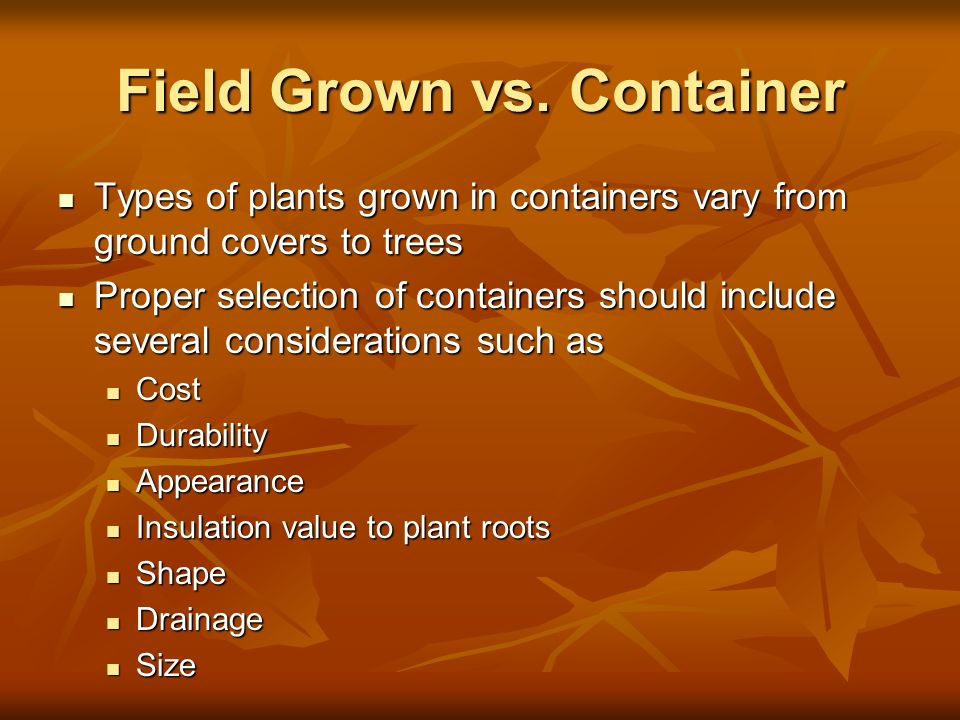 Field Grown vs. Container Types of plants grown in containers vary from ground covers to trees Types of plants grown in containers vary from ground co