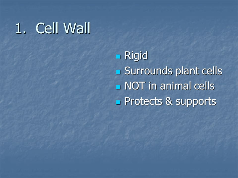 1. Cell Wall Rigid Rigid Surrounds plant cells Surrounds plant cells NOT in animal cells NOT in animal cells Protects & supports Protects & supports
