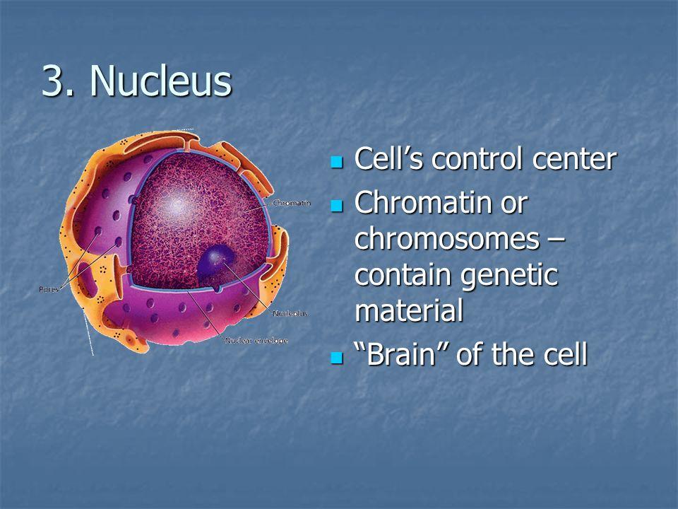 3. Nucleus Cells control center Cells control center Chromatin or chromosomes – contain genetic material Chromatin or chromosomes – contain genetic ma
