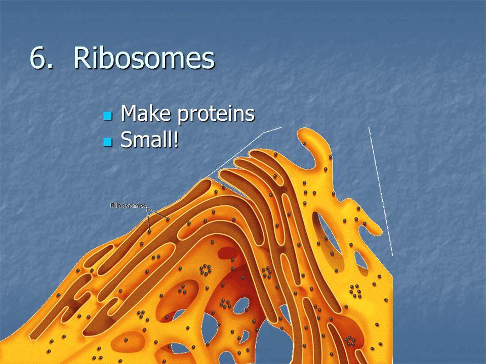6. Ribosomes Make proteins Make proteins Small! Small!