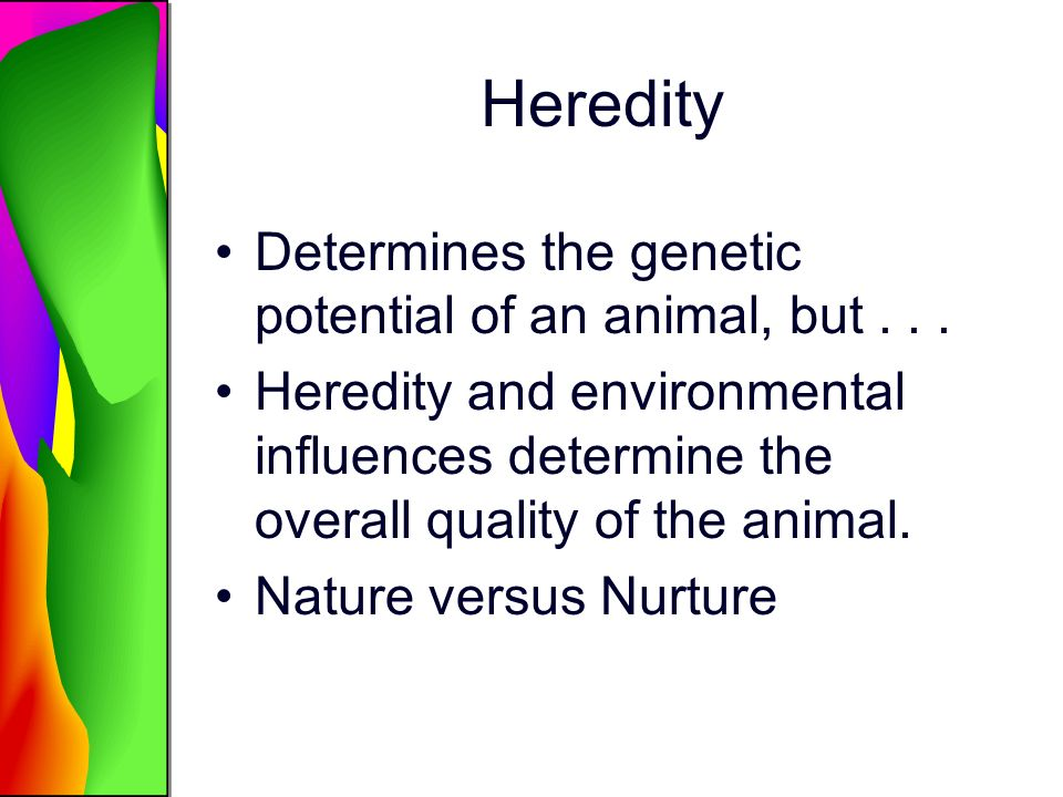 Heredity Determines the genetic potential of an animal, but... Heredity and environmental influences determine the overall quality of the animal. Natu