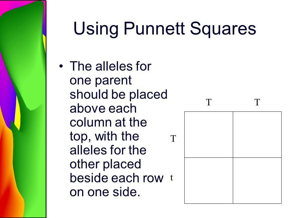 Using Punnett Squares The alleles for one parent should be placed above each column at the top, with the alleles for the other placed beside each row