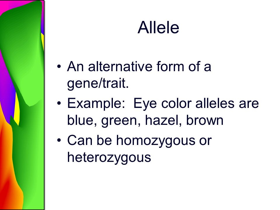 Allele An alternative form of a gene/trait. Example: Eye color alleles are blue, green, hazel, brown Can be homozygous or heterozygous