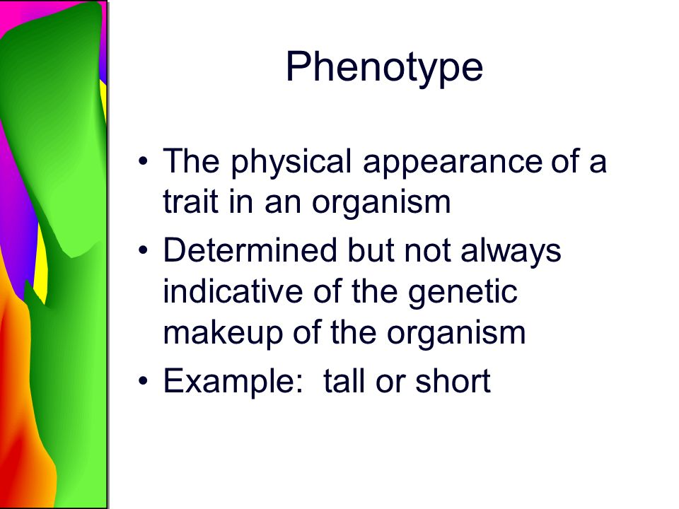 Phenotype The physical appearance of a trait in an organism Determined but not always indicative of the genetic makeup of the organism Example: tall o