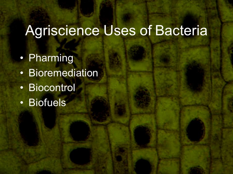 Agriscience Uses of Bacteria Pharming Bioremediation Biocontrol Biofuels