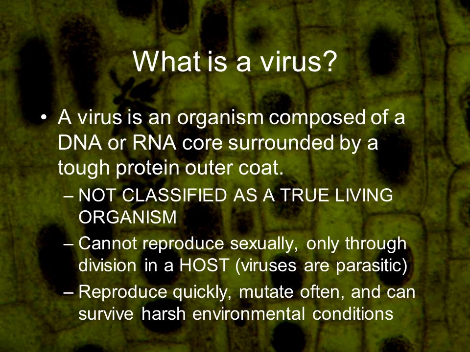 What is a virus.