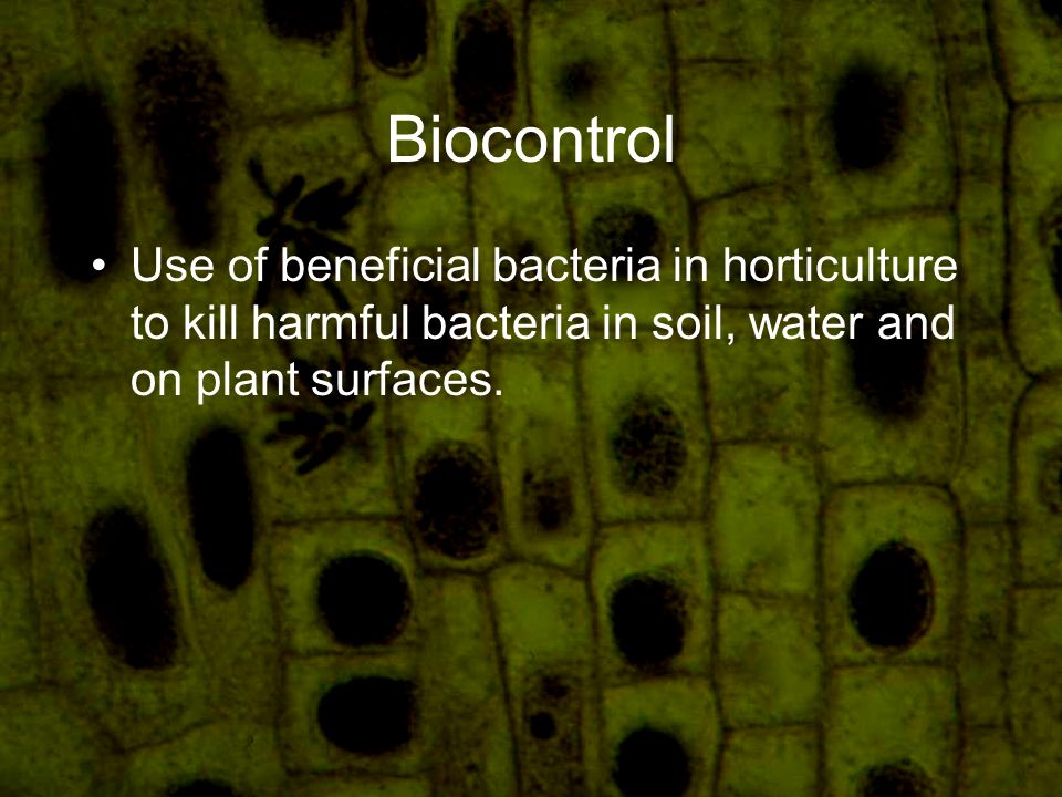 Biocontrol Use of beneficial bacteria in horticulture to kill harmful bacteria in soil, water and on plant surfaces.