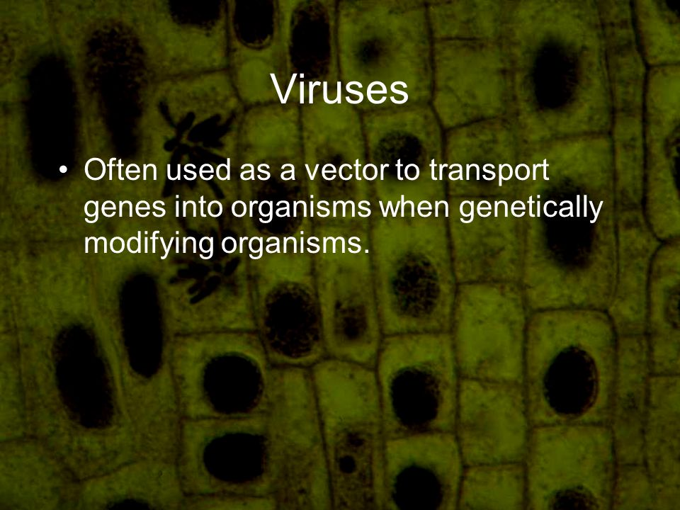 Viruses Often used as a vector to transport genes into organisms when genetically modifying organisms.