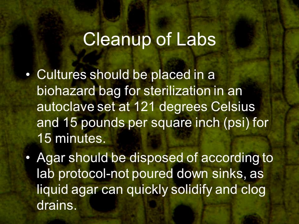 Cleanup of Labs Cultures should be placed in a biohazard bag for sterilization in an autoclave set at 121 degrees Celsius and 15 pounds per square inch (psi) for 15 minutes.