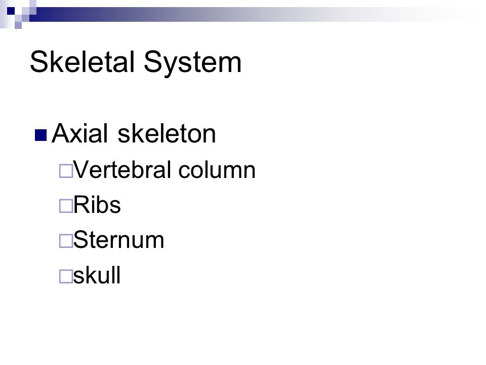 Skeletal System Purpose-to protect vital body organs and give form or shape to the body Skull protects brain Ribs protect lungs and internal organs Sp