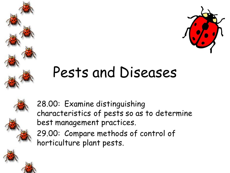 Diseases There are 3 conditions necessary for diseases in plants –host plant –disease causing organism or pathogen must be present –favorable environment for disease organism to develop