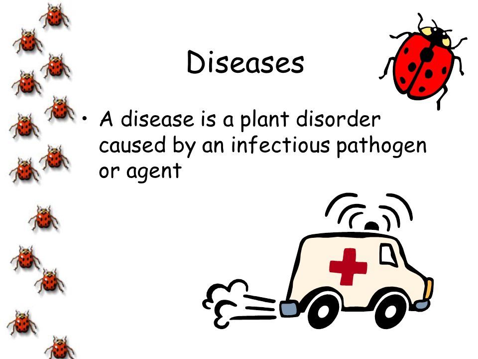 Diseases A disease is a plant disorder caused by an infectious pathogen or agent