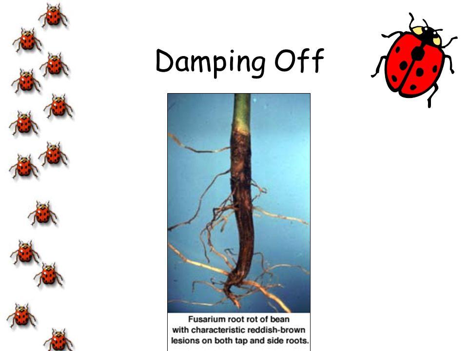 Damping Off