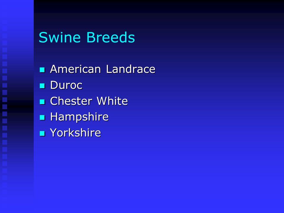 Swine Breeds American Landrace American Landrace Duroc Duroc Chester White Chester White Hampshire Hampshire Yorkshire Yorkshire