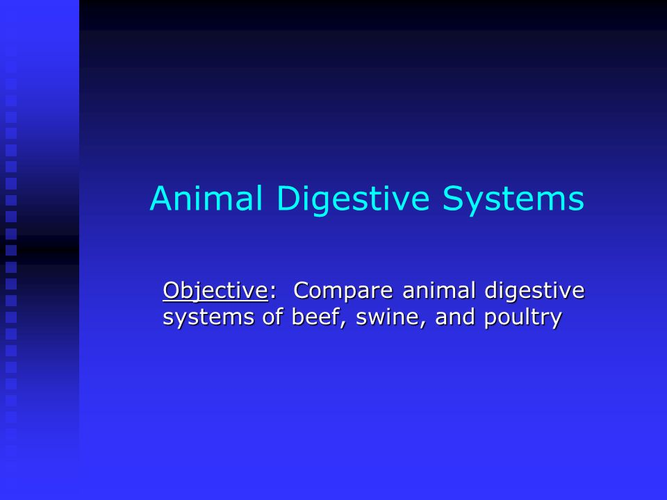 Animal Digestive Systems Objective: Compare animal digestive systems of beef, swine, and poultry