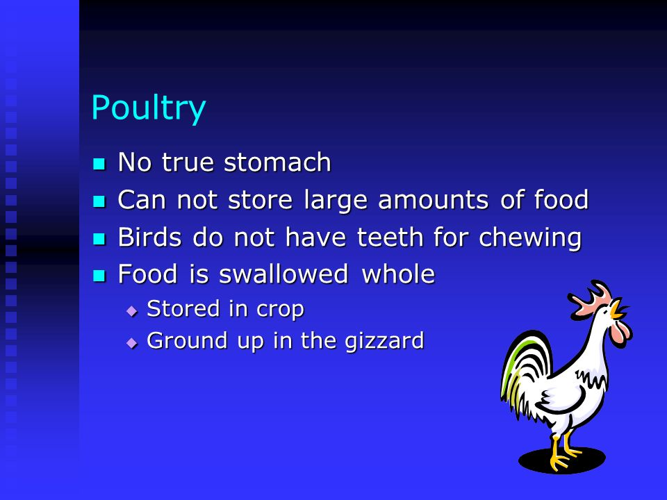 Poultry No true stomach No true stomach Can not store large amounts of food Can not store large amounts of food Birds do not have teeth for chewing Bi
