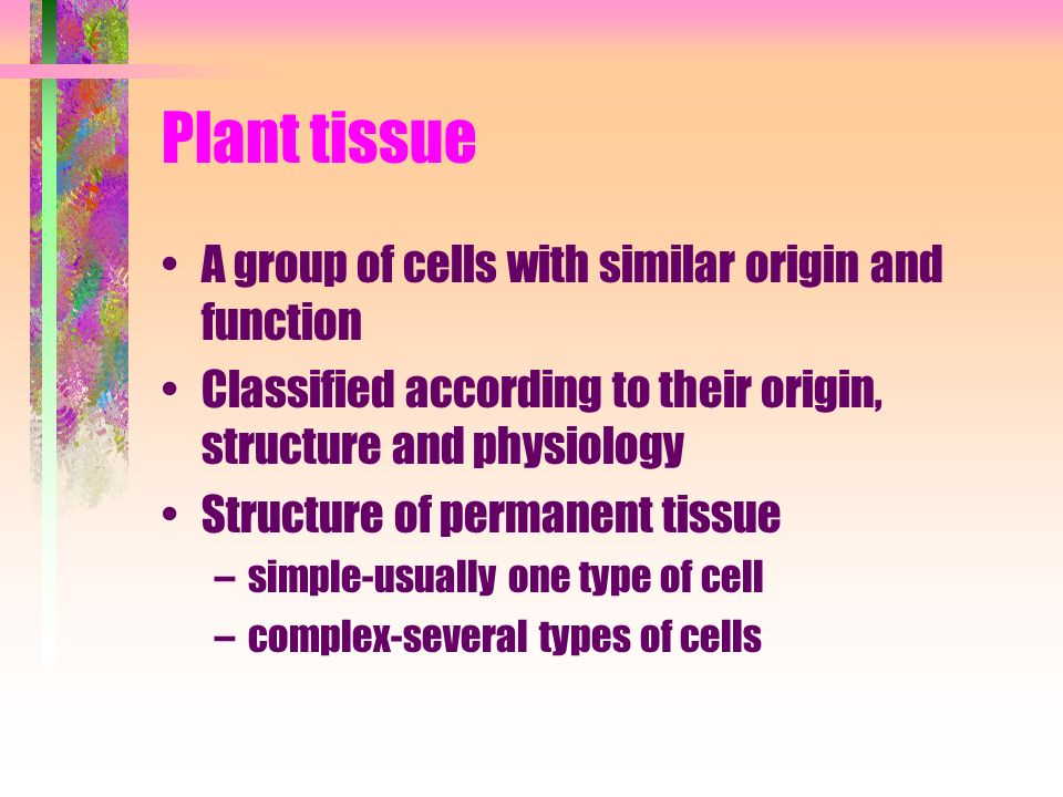 Plant tissue A group of cells with similar origin and function Classified according to their origin, structure and physiology Structure of permanent tissue –simple-usually one type of cell –complex-several types of cells