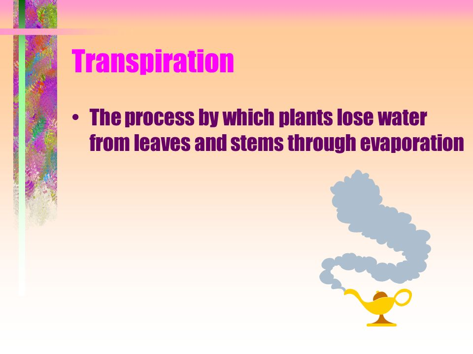 Transpiration The process by which plants lose water from leaves and stems through evaporation