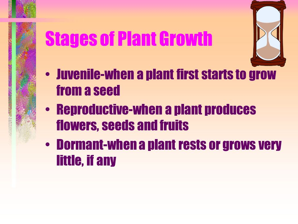 Stages of Plant Growth Juvenile-when a plant first starts to grow from a seed Reproductive-when a plant produces flowers, seeds and fruits Dormant-when a plant rests or grows very little, if any