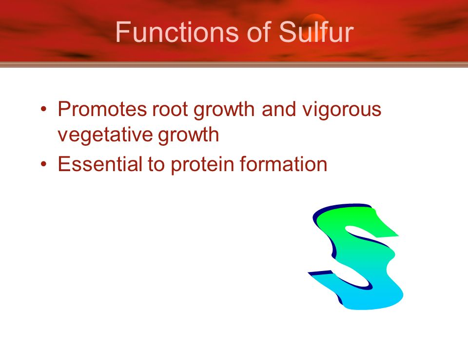 Functions of Sulfur Promotes root growth and vigorous vegetative growth Essential to protein formation