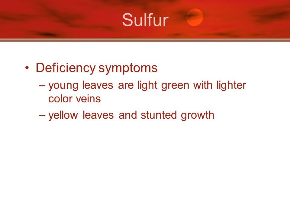 Sulfur Deficiency symptoms –young leaves are light green with lighter color veins –yellow leaves and stunted growth
