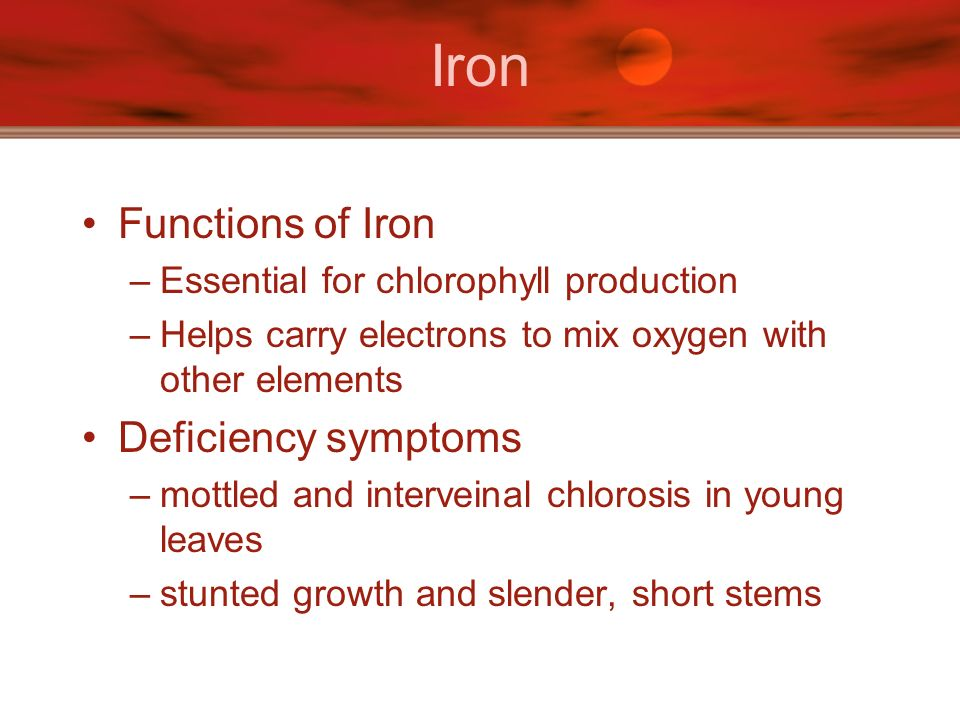 Iron Functions of Iron –Essential for chlorophyll production –Helps carry electrons to mix oxygen with other elements Deficiency symptoms –mottled and