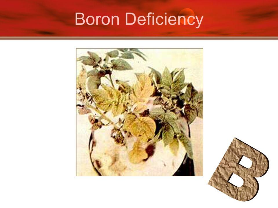 Boron Deficiency
