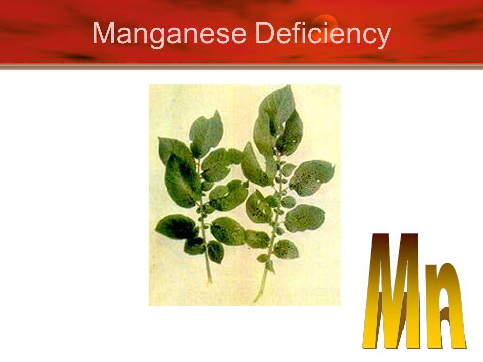 Manganese Deficiency
