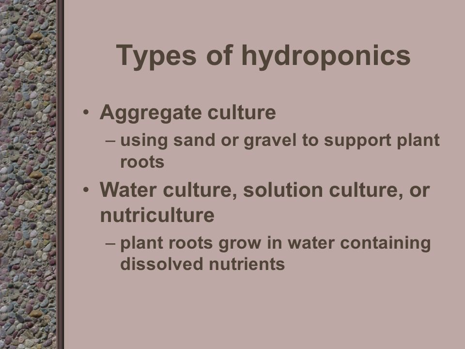Hydroponics The process of growing plants without soil