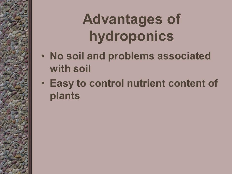 Hydroponics at Epcot