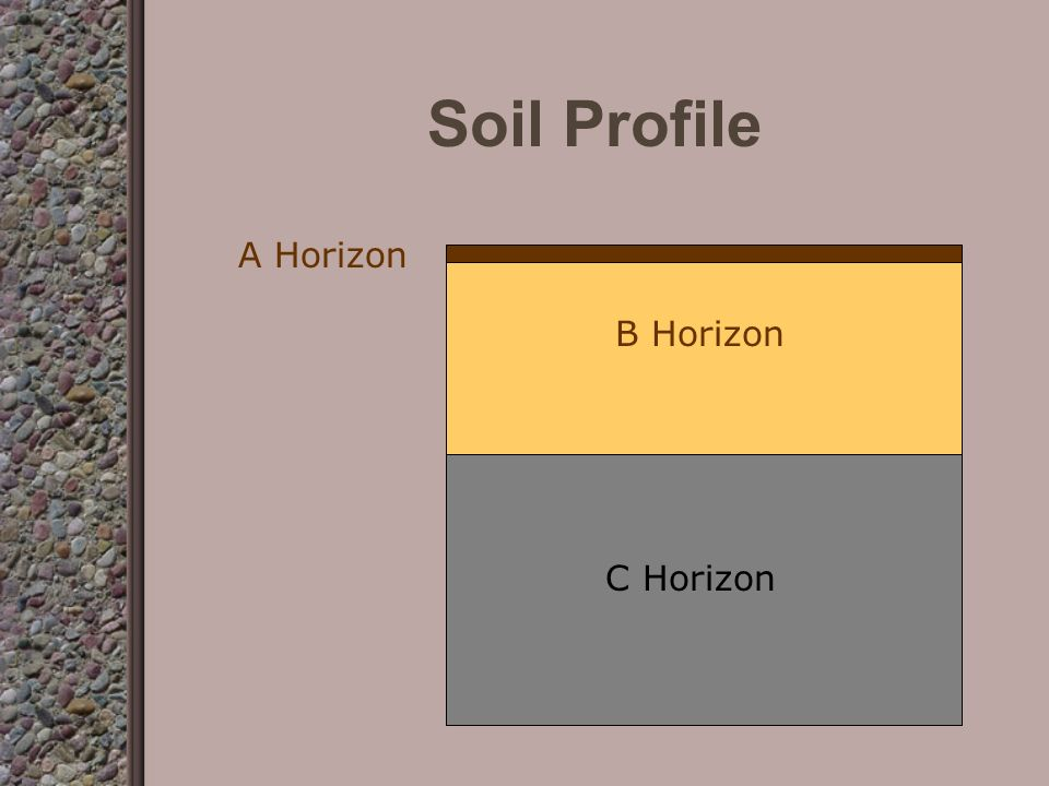 Soil Profile Layers of soil are called horizons Typical profile –A Horizon-topsoil most fertile most organic matter top or first layer –B Horizon-subsoil –C Horizon-bedrock