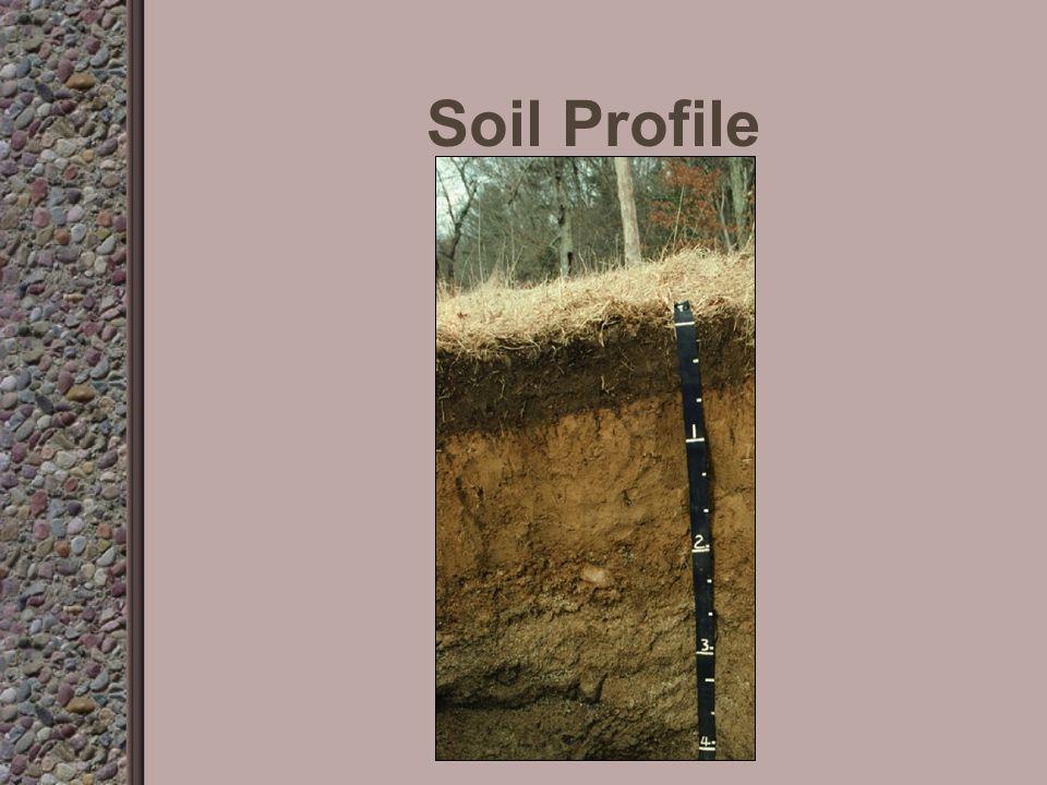 Soil Profile A Horizon B Horizon C Horizon