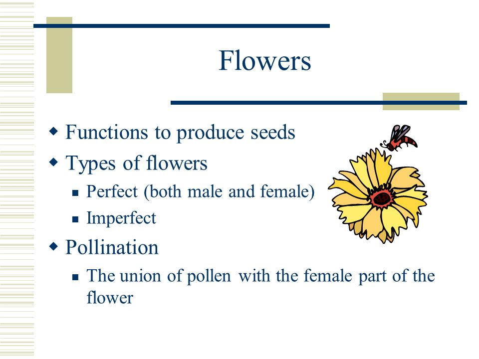 Flowers Functions to produce seeds Types of flowers Perfect (both male and female) Imperfect Pollination The union of pollen with the female part of t