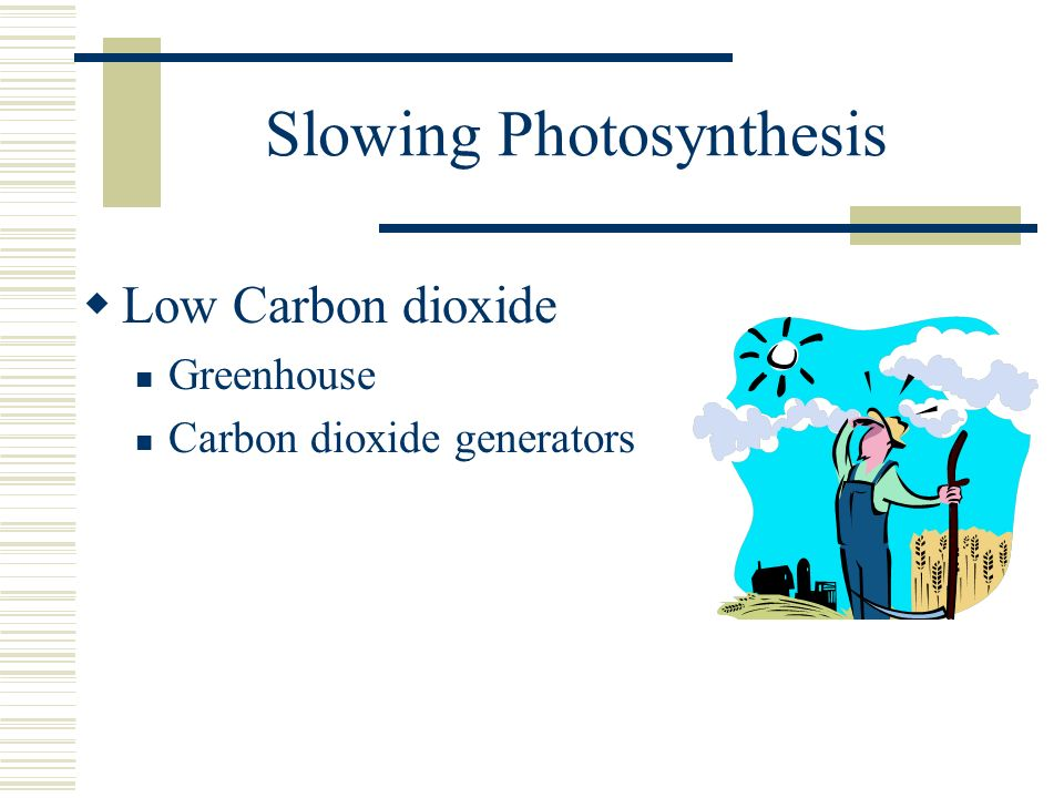 Slowing Photosynthesis Low Carbon dioxide Greenhouse Carbon dioxide generators