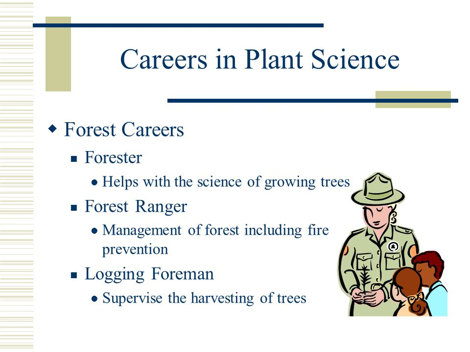 Careers in Plant Science Forest Careers Forester Helps with the science of growing trees Forest Ranger Management of forest including fire prevention Logging Foreman Supervise the harvesting of trees