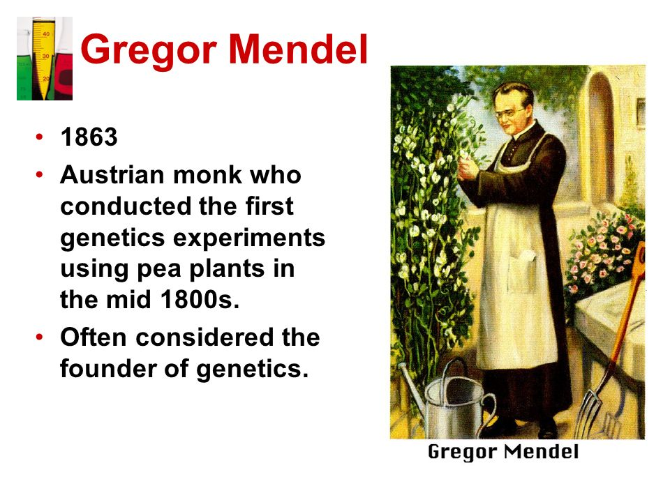 Gregor Mendel 1863 Austrian monk who conducted the first genetics experiments using pea plants in the mid 1800s. Often considered the founder of genet