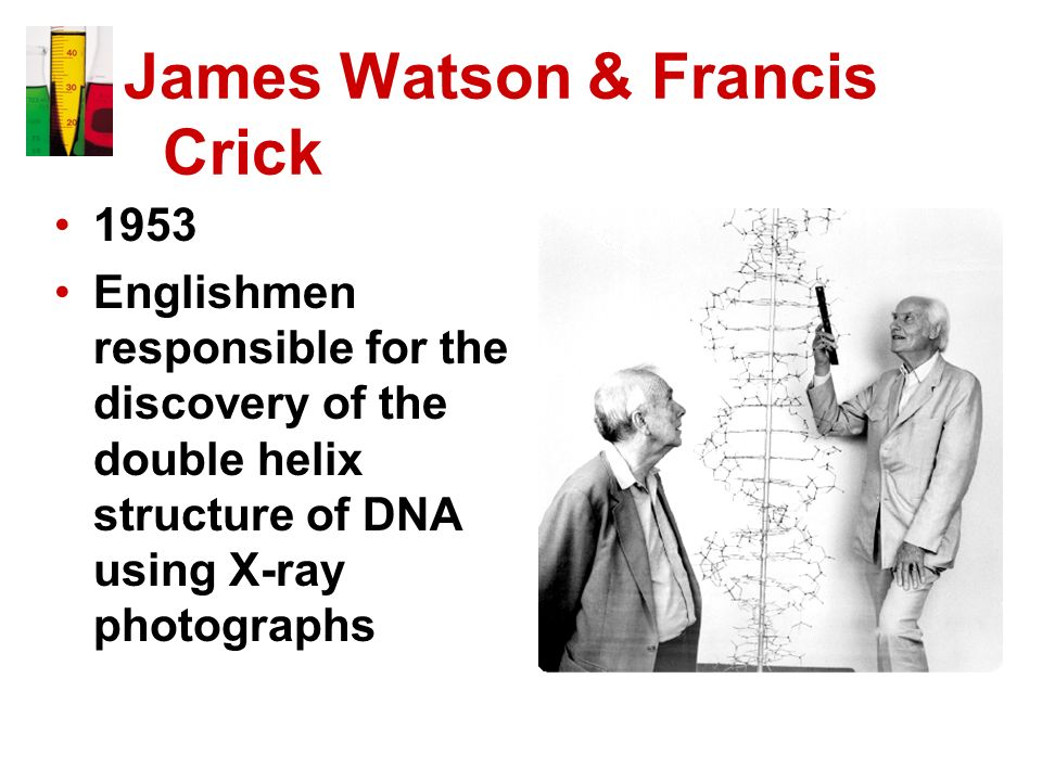 James Watson & Francis Crick 1953 Englishmen responsible for the discovery of the double helix structure of DNA using X-ray photographs