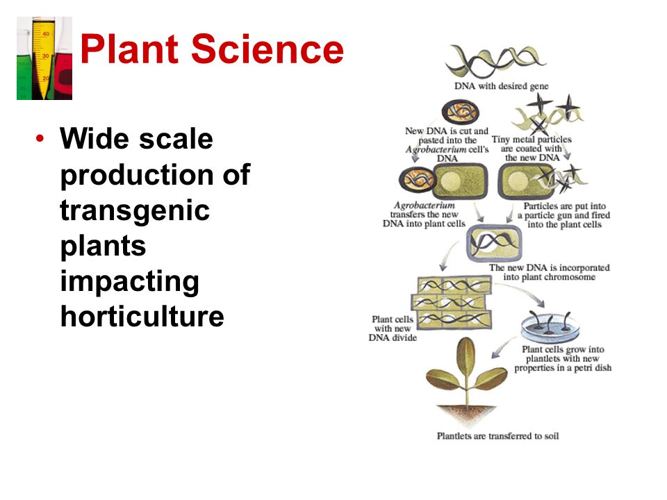 Plant Science Wide scale production of transgenic plants impacting horticulture