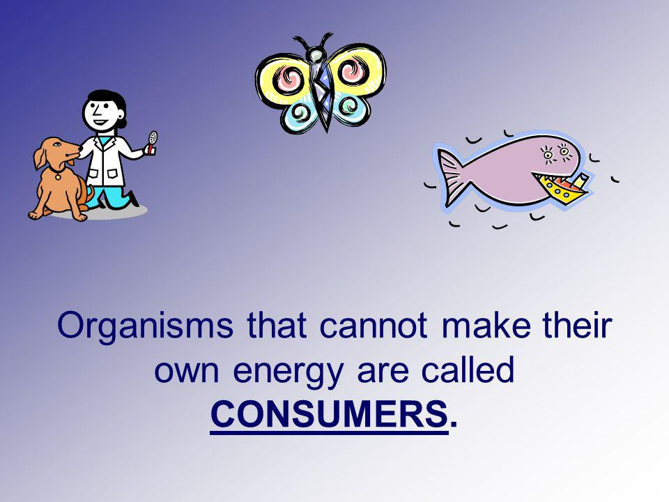 Consumers that eat producers to get energy: Are first order or primary consumers Are herbivores (plant-eaters)