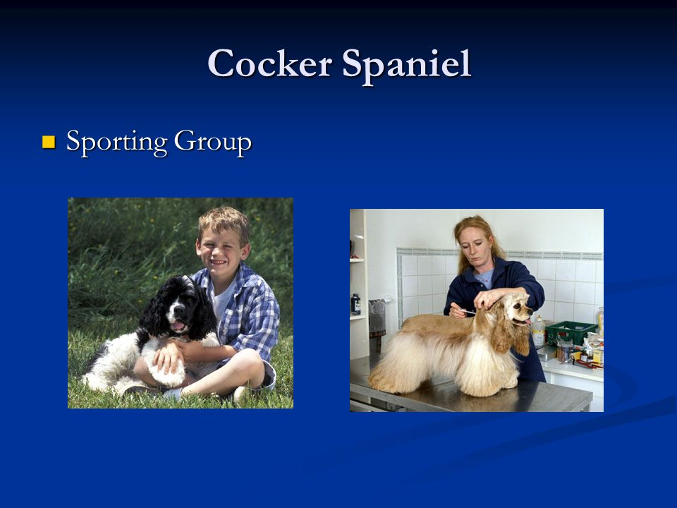 Cocker Spaniel Sporting Group Sporting Group