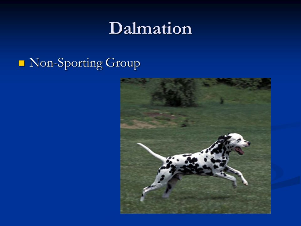 Dalmation Non-Sporting Group Non-Sporting Group