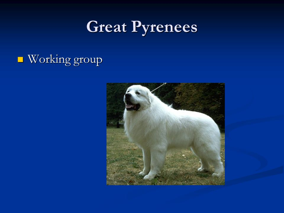 Great Pyrenees Working group Working group