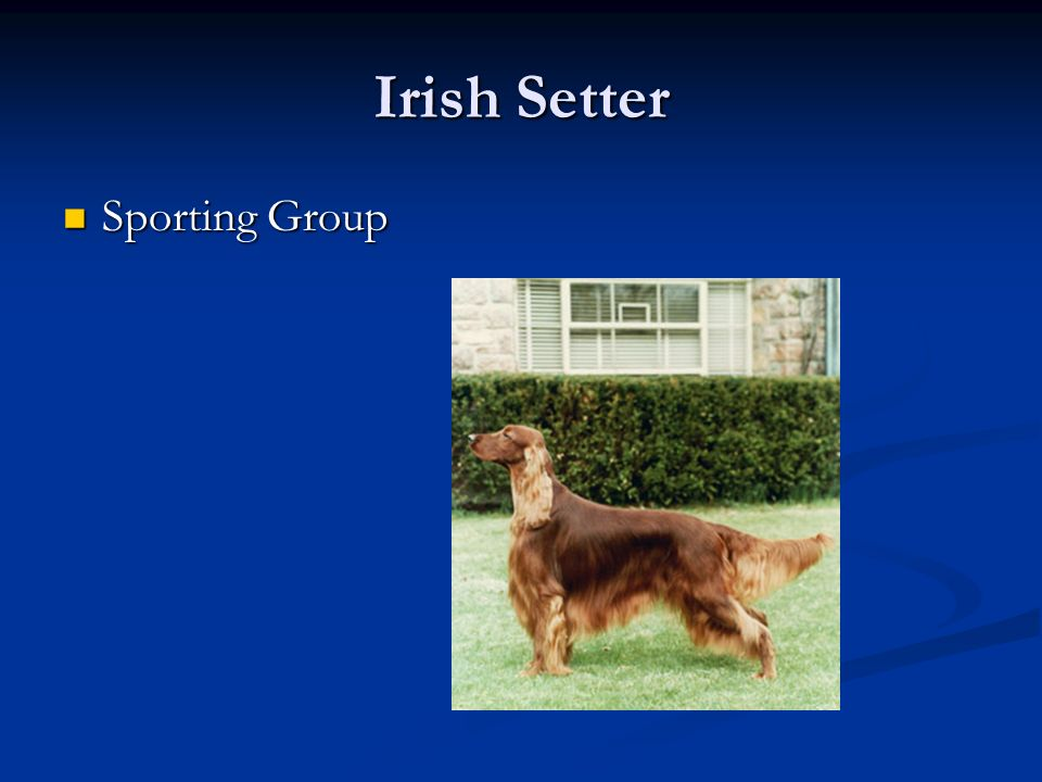 Irish Setter Sporting Group Sporting Group