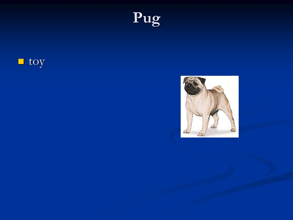 Pug toy toy