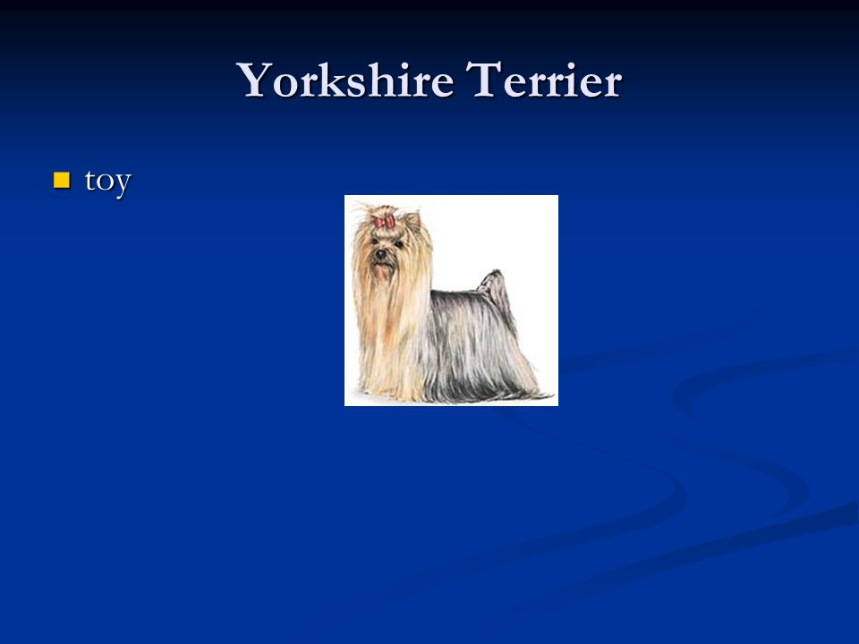 Yorkshire Terrier toy toy