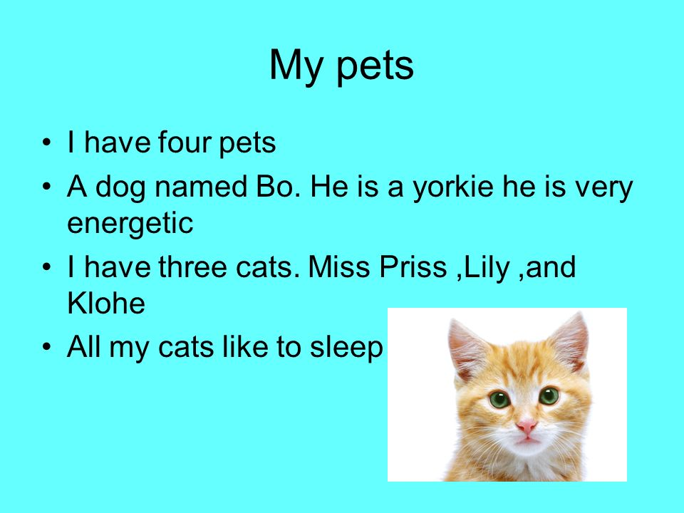 My pets I have four pets A dog named Bo.He is a yorkie he is very energetic I have three cats.