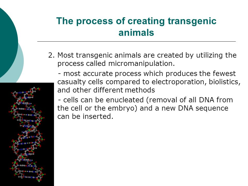 The process of creating transgenic animals 2.