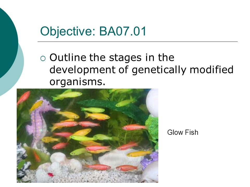 Glow Fish Objective: BA07.01 Outline the stages in the development of genetically modified organisms.