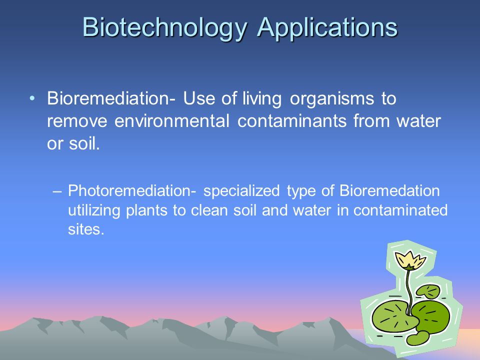 Biotechnology Applications Bioremediation- Use of living organisms to remove environmental contaminants from water or soil.