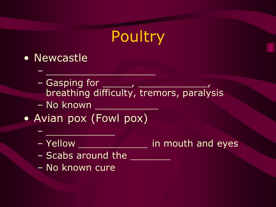 Poultry Newcastle –___________________ –Gasping for _____, ____________, breathing difficulty, tremors, paralysis –No known ___________ Avian pox (Fowl pox) –____________ –Yellow ____________ in mouth and eyes –Scabs around the _______ –No known cure